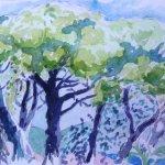 Les Pins Parasols de St.Tropez thumbnail