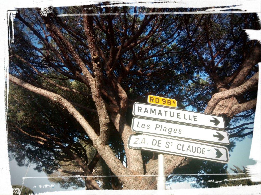 Pin Parasol Distance Maison les pins parasols de st.tropez